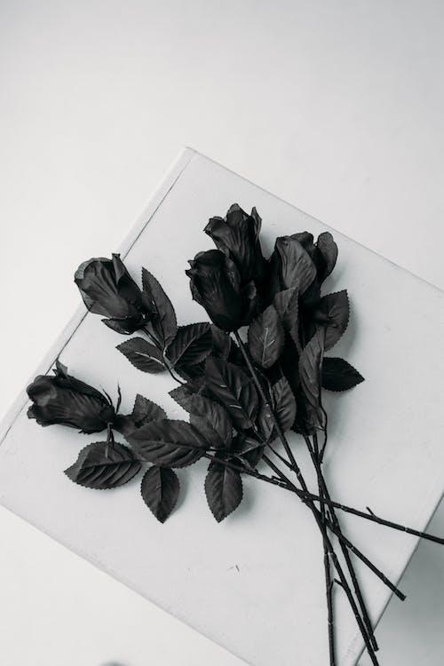 Kostenloses Stock Foto zu blätter, blumen, blütenblätter, disjunct
