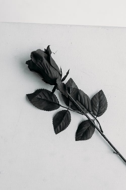 Black Rose on White Surface