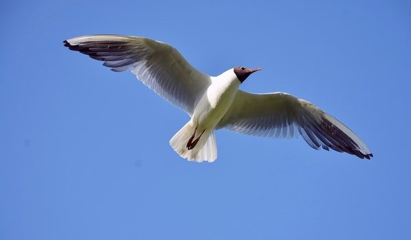 White and Brown Bird Flying Under Blue Sky during Daytime