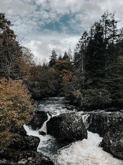 下落, 冬季, 原本, 小河 的 免费素材图片
