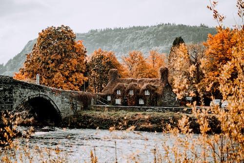 下落, 冬季, 原本, 季節 的 免费素材图片