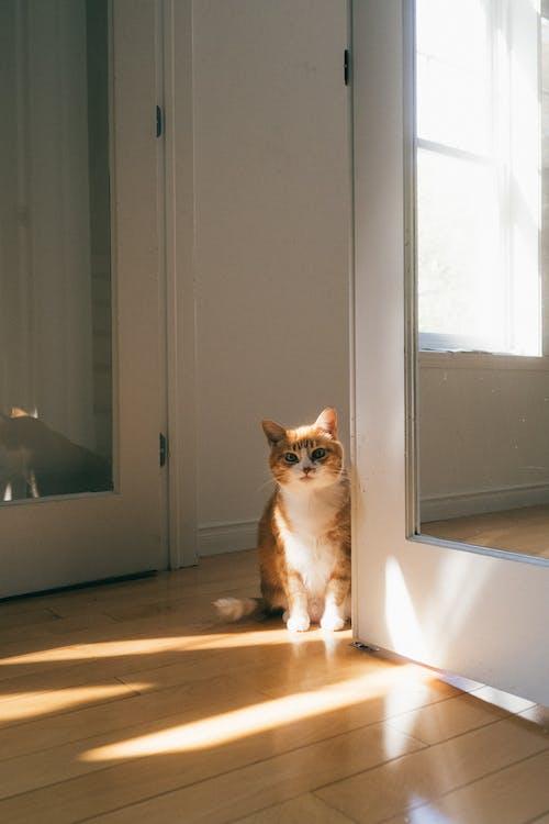 Orange and White Cat Sitting on Floor