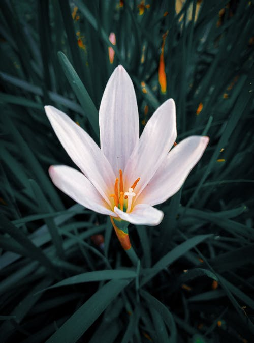 Foto profissional grátis de flor, flor branca, fotografia de flores