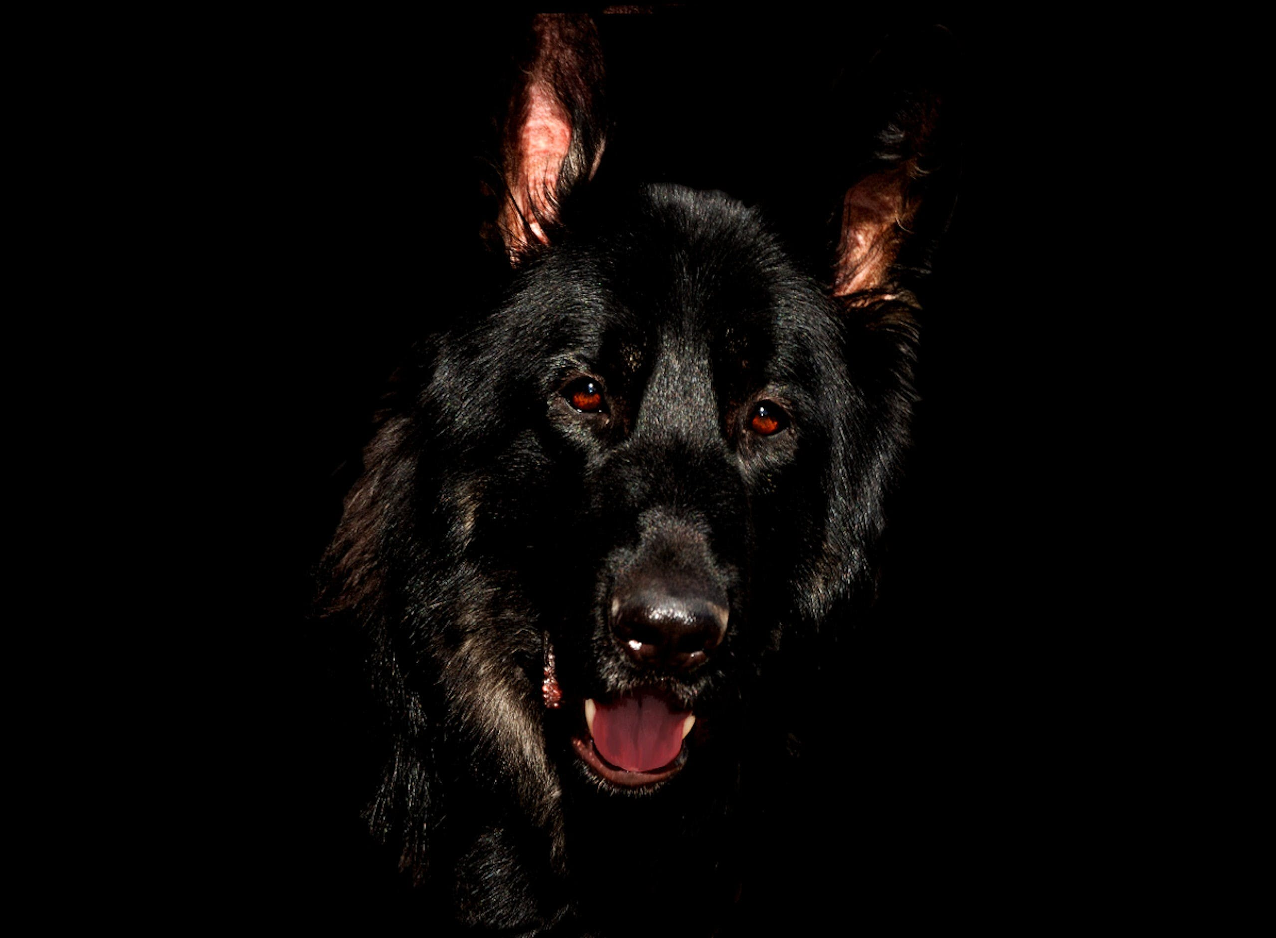 개, 개의, 검은색, 동물의 무료 스톡 사진