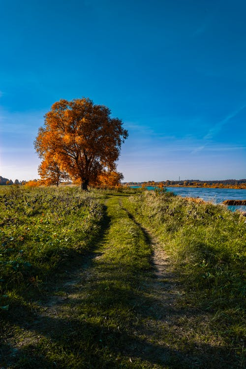 Grassy shore with tree in autumn
