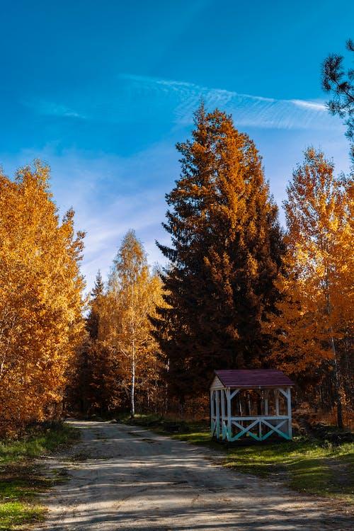 Fotos de stock gratuitas de afuera, aire libre, alto