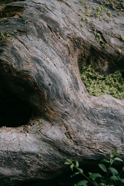 Old tree trunk in forest in daytime