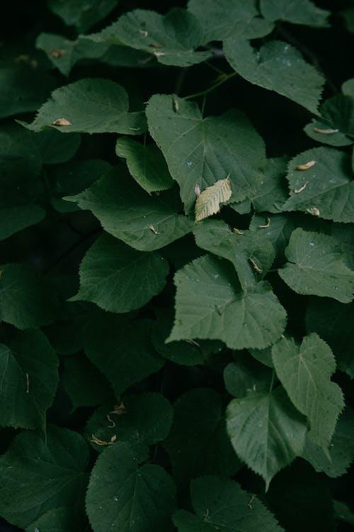 Бесплатное стоковое фото с безмятежный, Биология, ботаника