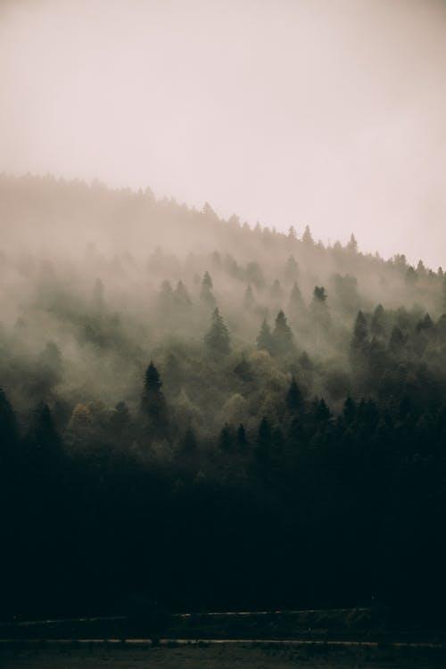 Zielony Mglisty Las Na Zboczu Wzgórza