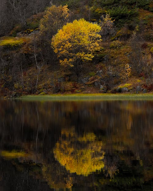 Yellow and Green Trees Beside Lake