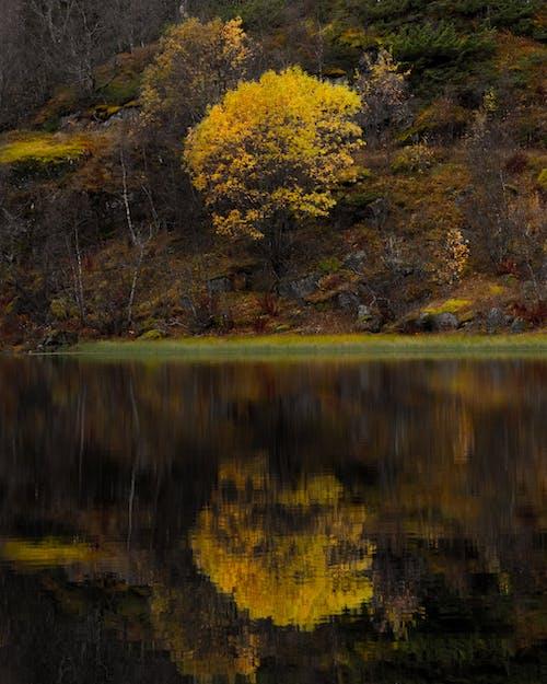 Photos gratuites de arbre, arbres forestiers, atmosfera de outono