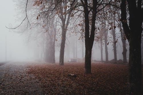 Gratis stockfoto met blad, bladeren, boom, dageraad