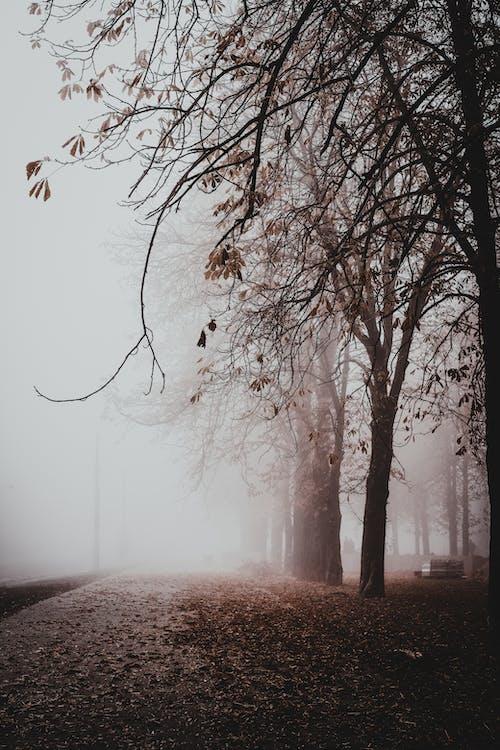 Gratis stockfoto met alleen, atmosfeer, betoveren, blad