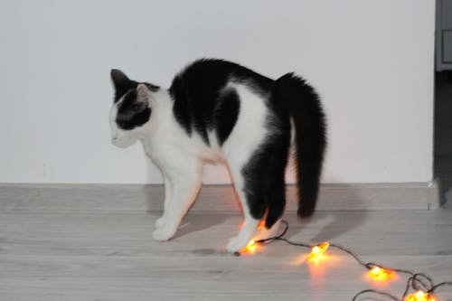 Free stock photo of animal lover, animal photography, cat, halloween