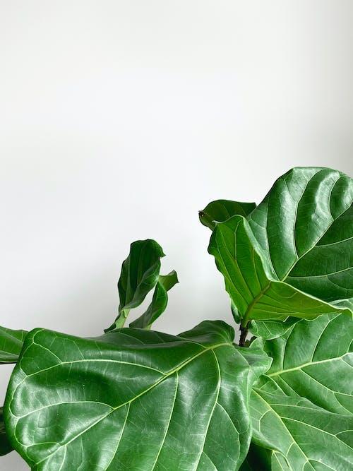 Photos gratuites de aliments, biologie, couleur, croissance