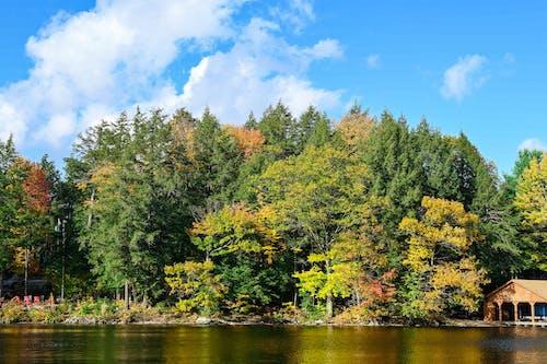 Green Trees Beside River Under Blue Sky