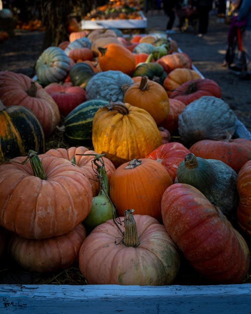Ripe pumpkins on urban market