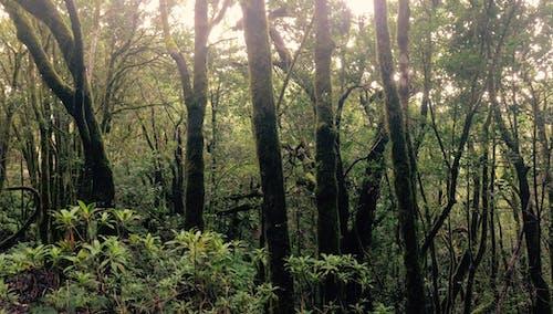 Бесплатное стоковое фото с лес