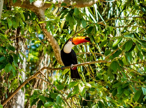 Black White and Red Bird on Tree Branch