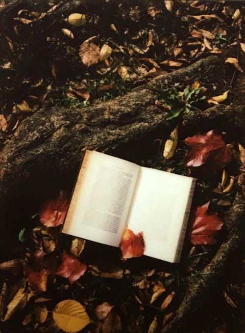White Book on Brown Dried Leaves