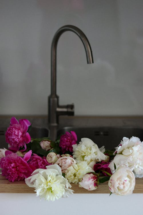 Fresh fragrant peony flowers with pink and white petals placed in kitchen basin