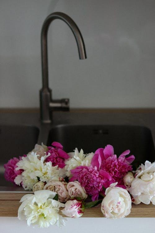 Gratis arkivbilde med anlegg, aroma, blomst