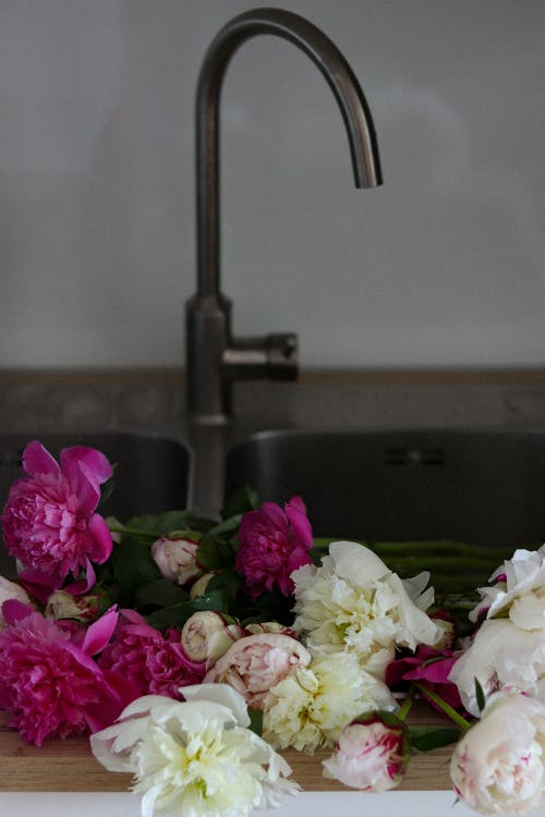 Fragrant fresh peony flowers of bright pink and white colors with stems placed in kitchen basin