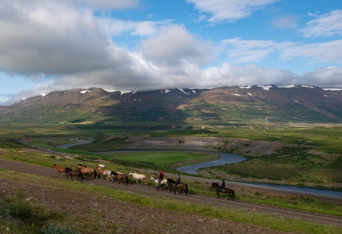 Horses on Green Grass Field Under Cloudy Sky