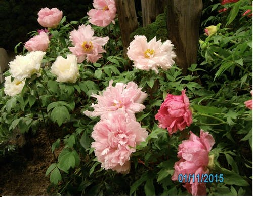 คลังภาพถ่ายฟรี ของ ไม้ดอก