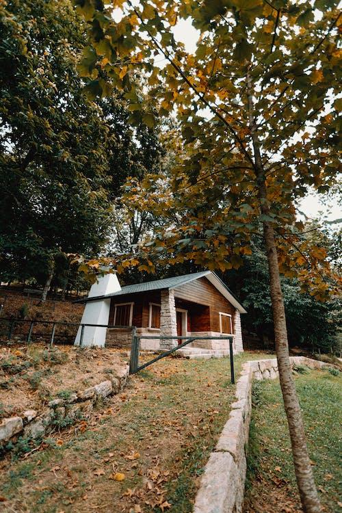 Foto stok gratis alam, Arsitektur, atap, bagus