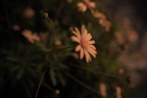Foto profissional grátis de de flores, floral, florido