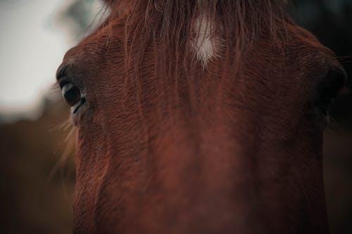 Foto profissional grátis de animais selvagens, animal, bicho, cabelo