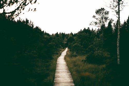 Imagine de stoc gratuită din arbori, cale, cer, codru