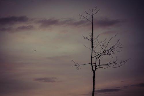 Δωρεάν στοκ φωτογραφιών με δέντρο, λυπημένος, συννεφιασμένος ουρανός