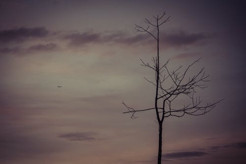 Free stock photo of cloudy sky, sad, tree