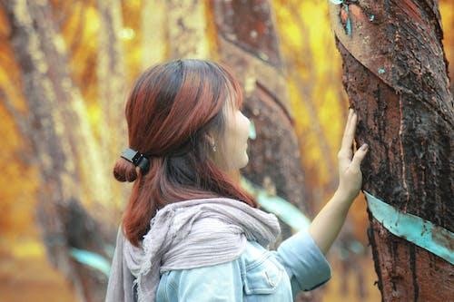 Free stock photo of girl, tree