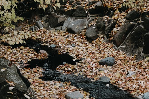 Gray Rocks And Fallen Leaves on River