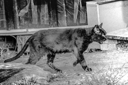 Kara kedi, kedi, sokak kedisi içeren Ücretsiz stok fotoğraf
