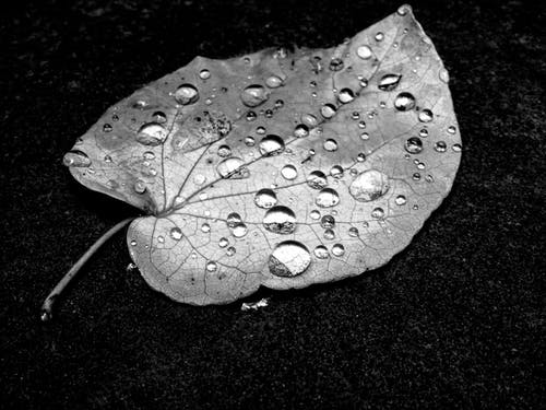Water Drop on Leaf