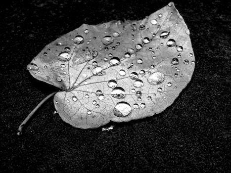 Free stock photo of water, pattern, dew, rain