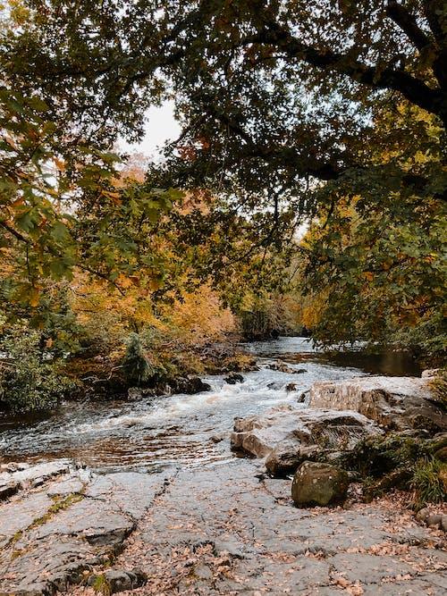下落, 公園, 原本, 季節 的 免费素材图片