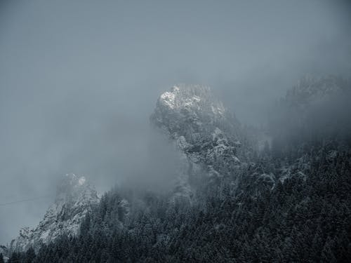 Snow Covered Trees On A Foggy Day