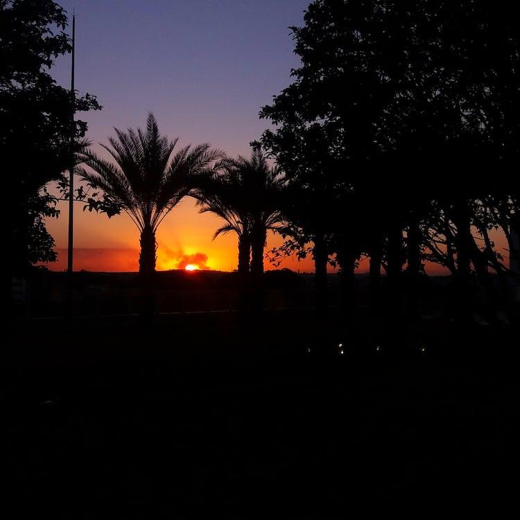 Free stock photo of à rvores, panoramica, por do sol