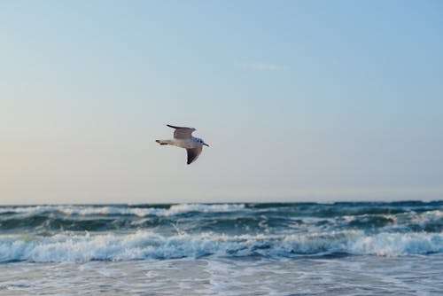 Seagull flying over stormy sea