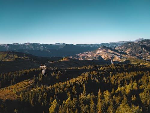 Foto d'estoc gratuïta de a l'aire lliure, alba, arbres