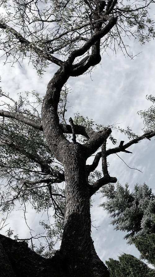 Low Angle Photography of Tree