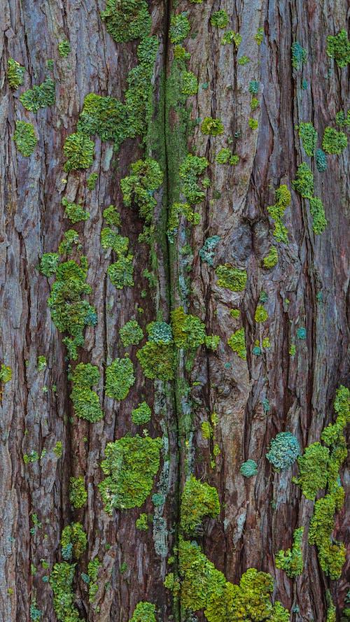 Imagine de stoc gratuită din arbore, buștean, copac