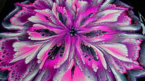 Purple Flower in Macro Photography