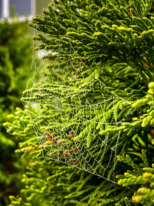 Free stock photo of nature, spider, spidernet