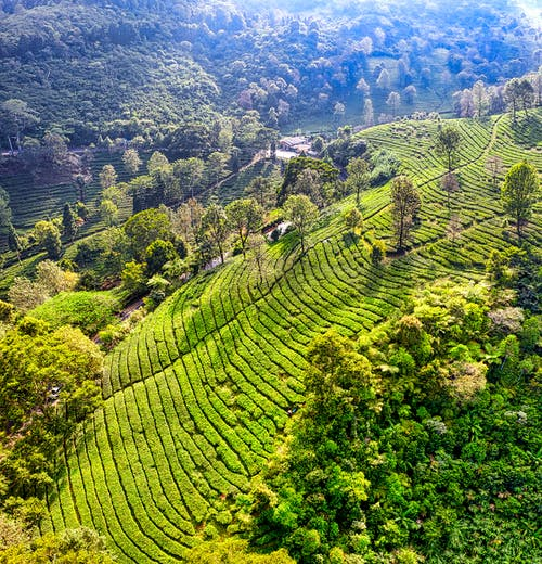 Drone view of green fields on hill with plantations near trees and plants in sunny summer day in nature